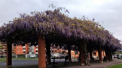 Abril (eitb.eus) Tags: eitbcom 30487 g1 tiemponaturaleza tiempon2019 flora bizkaia portugalete juantxuaberasturi