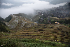 Longsheng Rice Terraces (Clint Atkinson) Tags: longshan china fields farmer autumn rain clouds rice terraces longsheng longji
