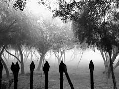 The fake horror park (johnny-fraisse) Tags: horror scary scenery park bw canon