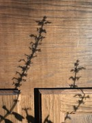 (GustavoG) Tags: cabinet wooden wood shadow unmodified coleus
