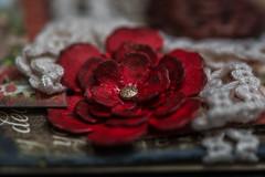 "Hobby (Sharon Meyer) Tags: ""macromondays"" hobby card papercraft craft crafting greetingcard cards flower redflower paperflower distressedflower"