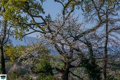 Arette (https://pays-basque-et-bearn.pagexl.com/) Tags: 2019 64 aquitaine arette barétous béarn colinebuch eau france mars arbres ciel montagne nature paysage pyrénées pyrénéesatlantiques vallée