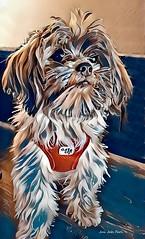 (c)  Dog - Frido (Jui Jah Fari) Tags: hund dog frido kunst art artist künstler artistic artwork kunstwerk kunstbild juijahfari painting paintcreation paint digital digitalpaint photopaint photoart modernart animals tier fotokunst