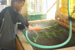 Farm lesson