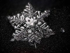 29jan19i (peterobrien186) Tags: snow snowflake snowcrystal whitelight nature macro winter ice