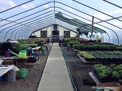 IMG_3500wtmk (CIAphotos) Tags: aberdeen wa usa ipod iphonography weatherwax aberdeenhighschool greenhouse plants gardening garden