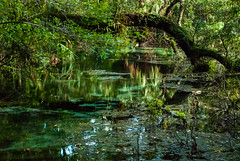 Light in the Swamp (Terri Toll) Tags: d80 earthnaturelife florida landscape lightshadow swamp nikon nikond80 outdoor trees reflections