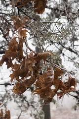 (Theresa Best) Tags: illinois winter ice leaf nature cold fmspad fmsopposites canon canon760d canont6s canon8000d explorecreatewonder theresabest adventure