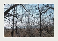 _P1M3104-f (christoph.schaupper) Tags: bodenseeufer bodensee bäume trees lakeconstance lindau ufer