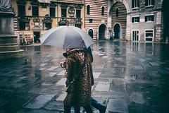 Rain (Roberto Spagnoli) Tags: rain pioggia fotografiadistrada streetphotography piazza square couple verona italy color fur walking urbanpoetry everydaylife leopard