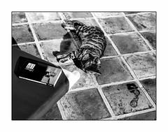 Un bon bouquin, une sieste.... le pied! (francis_bellin) Tags: blackanwhite piscine bengal eau chat netb livre noiretblanc bw 2019 monochrome espagne