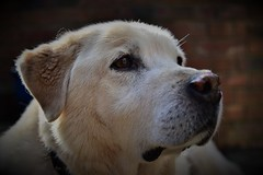 My mate Murphy (Glenn Birks) Tags: dog