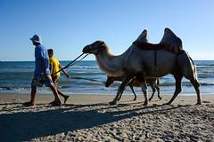 Конец дня (Yuriy Kuzmenok) Tags: верблюд берег море вечер