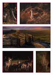 Favorite Images- Rolled in to one-1 (neil 36) Tags: deer landscape nature wildlife outdoors nikon d7200 collage collection wildlifephotography nikond7200