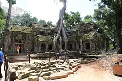 Angkor_Ta Prohm_2014_19