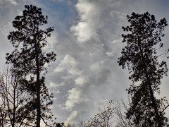Pair Of Trees And Clouds. (dccradio) Tags: lumberton nc northcarolina robesoncounty outdoors outdoor outside nature natural backyard march thursday thursdayevening evening goodevening nikon coolpix l340 bridgecamera sky eveningsky clouds cloudformation tree trees evergreen pine bluesky scenic beauty beautiful pretty