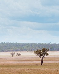 Simplicity (Bron.Wolff) Tags: qld australia colours sky clouds simplicity nature minimalist trees fields scenery rural landscape