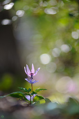 20190321-DS7_1199.jpg (d3_plus) Tags: bokeh aiafzoomnikkor80200mmf28sed d700 thesedays wildflower 日常 walking 城山 ボケ 相模原 望遠 カタクリ 自然 景色 dogtoothviolet sagamihara trekking 神奈川県 sky telephoto 山野草 風景 japan erythroniumjaponicum ニコン トレッキング nature dailyphoto ハイキング nikon nikond700 kanagawa flower nikkor shiroyama 8020028 dogtoothvioletvillage bloom 植物 80200mmf28d 散歩 80200mmf28af plant 花 scenery 80200mmf28 daily 城山かたくりの里 hiking 80200 日本 tele 80200mm かたくりの里 空