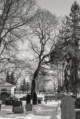 Cemetery, Vantaa Finland (m.pertti) Tags: landscape cemetery helsinginpitäjänkirkonkylä tree vantaa finland film blackandwhite monochrome