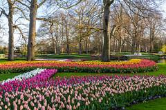 Keukenhof - Colorful tulips (jan.vd.wolf) Tags: keukenhof thenetherlands lisse zuidholland nederland nl lisse2019 bloembollen flowers bulbs