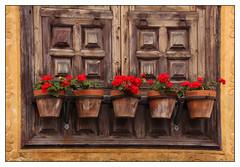 Le club des cinq -  The Five Club (diaph76) Tags: extérieur fenêtre windows volets shutters fleurs flowers pots cans espagne spain îlescanaries ténérife bois wood géraniums décoration