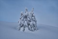 Eingeschneite Fichten am Hahnenkamm (stefangruber82) Tags: alps alpen winter snow schnee bäume trees tyrol tirol