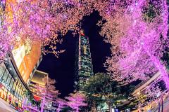 Taipei 101 Building / Taiwan (Jennifer 真泥佛) Tags: taipei101 台北101 信義區 taipei taiwan landscape night nightview building taipei101building 台北 台北市 台北一零一 信義商圈 微風南山 微風信義 微風百貨 新光三越 新光三越百貨 商圈 都會生活 跨年 2018 2019