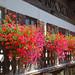 Garmisch - Altstadt (24) - Blütenpracht