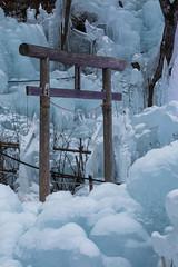 2019_093 (KusodebuJAPAN) Tags: japan saitama asigakubo chichibu icicle illumination 埼玉 秩父 芦ヶ久保 あしがくぼの氷柱 氷柱 イルミネーション