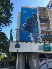 chat-au-mur© (alexandrarougeron) Tags: photo alexandra rougeron ville paris art urbain flickr style création rue