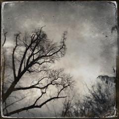hwisprian (Creepella Gruesome) Tags: iphone6splus hipstamatic nature tree branches silhouette sky squareformat blackandwhite blur spooky mysterious phantasm