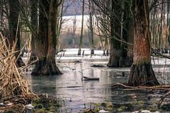 Pretended Winter [2/3] (gabormatesz) Tags: nature naturephotography canon tree trees lake abandoned