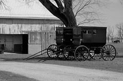 Amish Farm Near Arcola, Illinois (forestforthetress) Tags: amish buggy farm agriculture bw blackandwhite barn horse monochrome omot nikon outdoor rural country