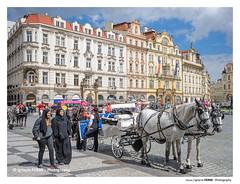 Horses (Ignacio Ferre) Tags: prag praga prague praha checoslovaquia chequia repúblicacheca czechrepublic czech moravia bohemia city ciudad europa nikon horse caballo gente people house casa