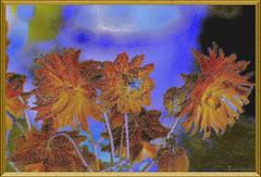 Granny's nightcap (Klaus • infrequently online •) Tags: europeancolumbine commoncolumbine grannysnightcap grannysbonnet akelei waldakelei aquilegiavulgaris akeleje lehtoakileija lancoliecommune aquilegiacomune wildeakelei akeleie akleja akvileja blühen bloom fioritura flor bloeien blommar kukkia blomst blomstre mekar kwiat hoa blóma cveti berkembang cvijet blumen flowers fiori flores fleurs bloemen blommor blomster bunga kwiaty blóm rože bungabunga cvijeće blüten blossoms bloesems kukkii cvetovi cvjetovi