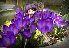 Peek-a-Boo (TutuBella) Tags: realpuki fairyland doll roro bliss beautifulday happyweekendflickrfriends crocus pretty flowers gardenfairy tinybjd knittedrompersetbyssmartraggs happyspring 🌷🌷🌷