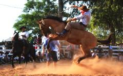 Juan Surt e Federal (Eduardo Amorim) Tags: gaúcho gaúchos gaucho gauchos cavalos caballos horses chevaux cavalli pferde caballo horse cheval cavallo pferd pampa campanha fronteira quaraí riograndedosul brésil brasil sudamérica südamerika suramérica américadosul southamerica amériquedusud americameridionale américadelsur americadelsud cavalo 馬 حصان 马 лошадь ঘোড়া 말 סוס ม้า häst hest hevonen άλογο brazil eduardoamorim gineteada jineteada