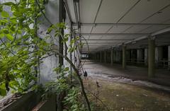 Vegetazione Industriale