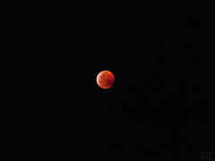 Red Moon (joseluissaucedo) Tags: redmoon moon eclipse luna mexico supermoon bloodmoon totaleclipse night 2019