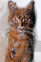Cat of C215 (Marco Braun) Tags: streetart graffiti comic bunt farbig colours colourful coloured katze cat chat gato gata gatta gatto maowalart urbanart blackwhite blanche noire eye auge orange кошка 貓 猫 māowalart