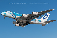 ANA_A380_JA381A_20190214_XFW-2 (Dirk Grothe | Aviation Photography) Tags: ana all nippon airways a380 ja381a xfw turtle
