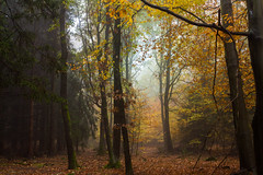 Ghost of autumn (Petr Sýkora) Tags: les mlha podzim autumn nature forest fog mist colorful trees