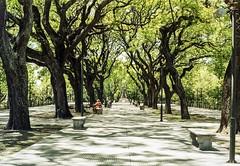 img320-2 (Buenos Aires loucoporanalogicas) Tags: pentax asahi spomatic agfa vista 200 color reserva ecológica costanera sur buenos aires argentina