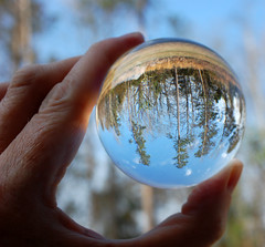 Upside Down Trees In A Ball. (dccradio) Tags: lumberton nc northcarolina robesoncounty outdoor outdoors outside nature tree trees bokeh nikon d40 dslr saturday saturdayafternoon winter january lensball ball glassball lensballphotography tensphy glassballphotography crystalball crystalballphotography woods sky bluesky backyard goodafternoon afternoon grass ground browngrass tallgrass weeds hand