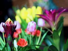 Flower bomb (palmipode) Tags: flowernaturecompositionpaintingnofilter flower nature naturemorte composition bokeh