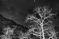 Light Snow in Bavaria, Germany, Winter 2011 (Claudio_R_1973) Tags: bavaria germany night winter snow monochrome blackandwhite landscape nature