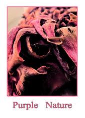 PurpleNature (myphotomailbox) Tags: rotterdam netherlands blijdorp zoo indoor victoriaserre purple color dierentuin diergaarde зоопарк 動物園 dýragarðinum állatkert ζωολογικόκήπο चिड़ियाघर kebunbinatang 동물원 grădinăzoologică eläintarha kukka زهرة 花 blume virág bláth flos fleur bunga цэцэг kvetina çiçek blomma