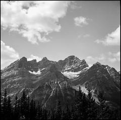 The Glacier (greenschist) Tags: trees blackwhite vaskar80mmf45 ilfordpanfplus50 6x6 mediumformat alberta mountains voigtlanderperkeoi canada banffnationalpark analog film clouds