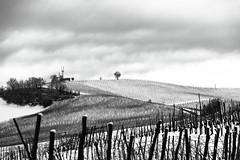 Inverno (F@bio F.) Tags: inverno neve cielo nuvole viti vigne colline olrepo stilizzato albero bianco nero monocromatico paesaggio panorama vista italia lombardia winter snow sky clouds tree hills field countryside black white bw blackandwhite monochrome landscape landscapes outdoor