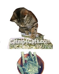 www.catnip4cats.com #cats #Caturday #catsofinstagram #CatsOfTwitter (RetrosheepCharms) Tags: wwwcatnip4catscom cats caturday catsofinstagram catsoftwitter